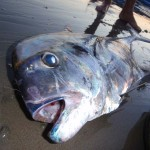 Bali Fishing Report – October 2 2008
